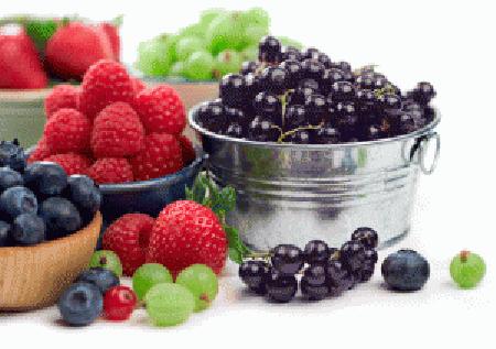 Anti Aging, Makanan Mencegah Keriput, Anti Penuaan Dini