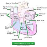 Jantur Berdebar, Penyebab Jantung Berdebar, Pengobatan Jantung Berdebar