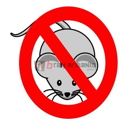 tikus, hama tikus, mengusir tikus, cara mengusir tikus, solusi mengusir tikus