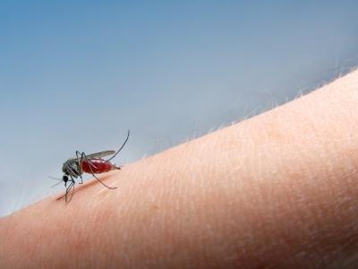malaria, penyakit malaria