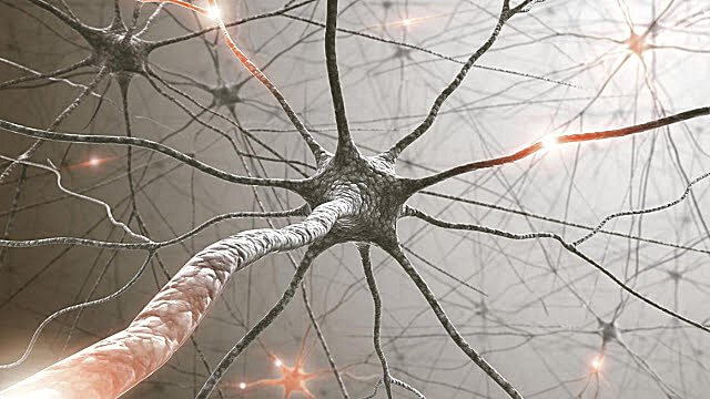 sel tubuh, sel tubuh bisa mendengar