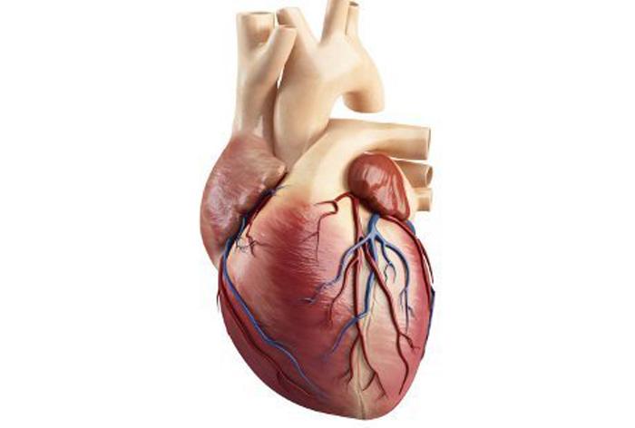 jenis penyakit jantung, jenis penyakit jantung dan gejalanya, macam macam penyakit jantung dan penyebabnya, bahaya penyakit jantung, kelainan pada jantung, gangguan pada jantung